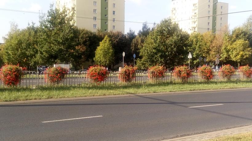 Kwiaty_w_Lublinie_15